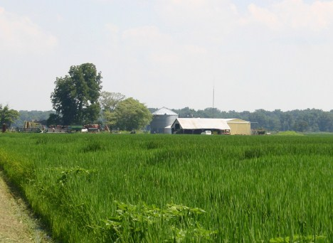 Rice field in the southern United States
