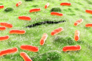 E. coli--getting harder and harder to resist.